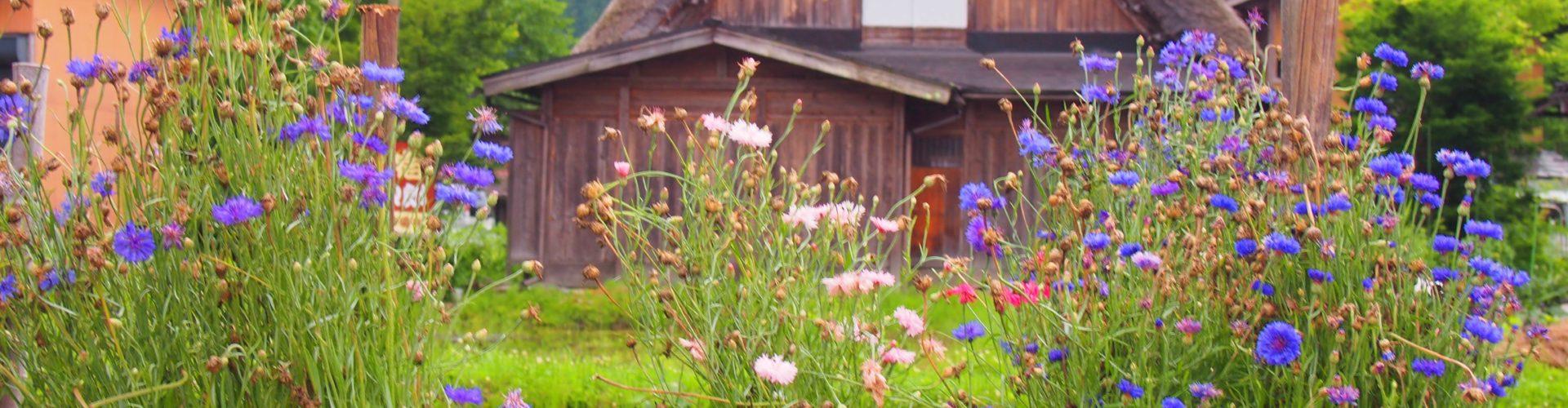 Kanazawa a Širakawago – místa, která nesmíte při návštěvě Japonska vynechat
